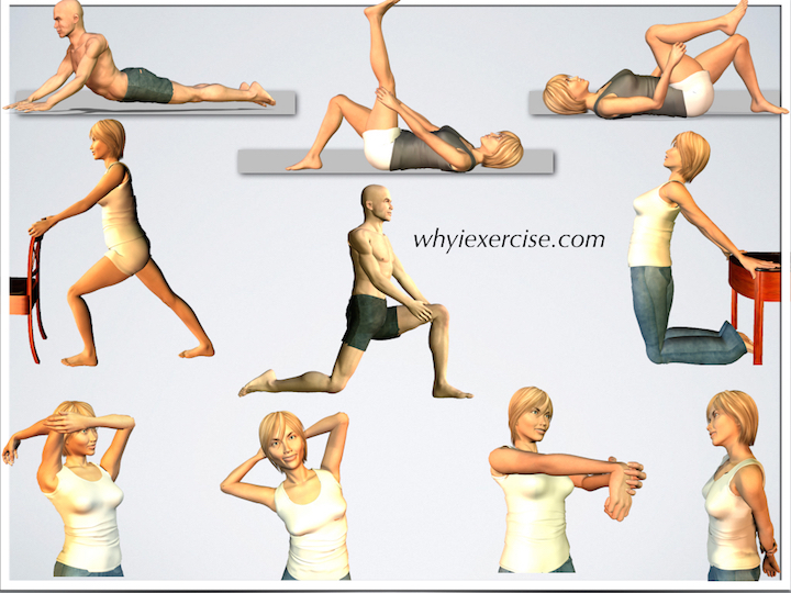 hope 2 muscular and flexibility workout The balance between muscular strength and flexibility is very important  for the workout  2 what is the most.